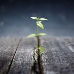 Bliv bedre til ledelse (foto se-institute.dk)